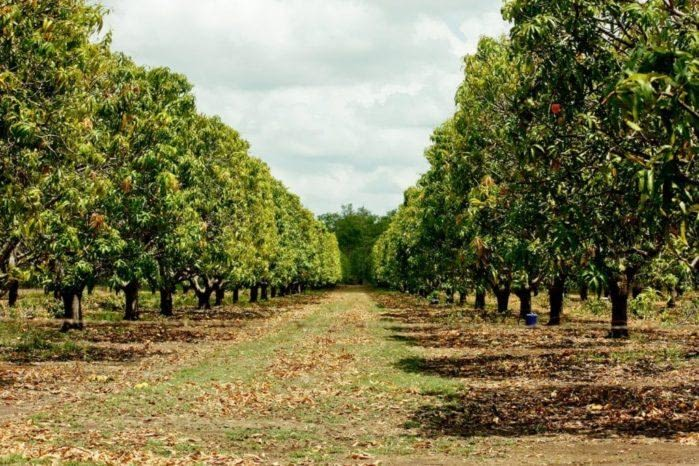 Reliable Houston Tree Service