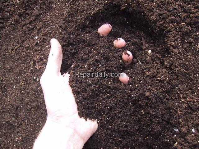 fresh-soil