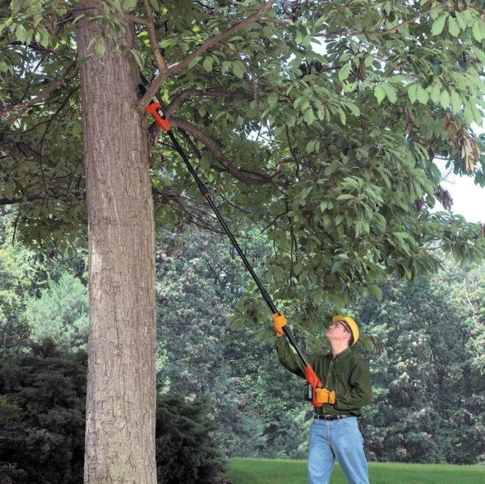 Garden Tools for Pruning Trees