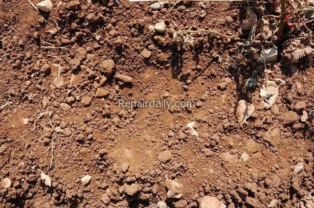 vineyard-soil
